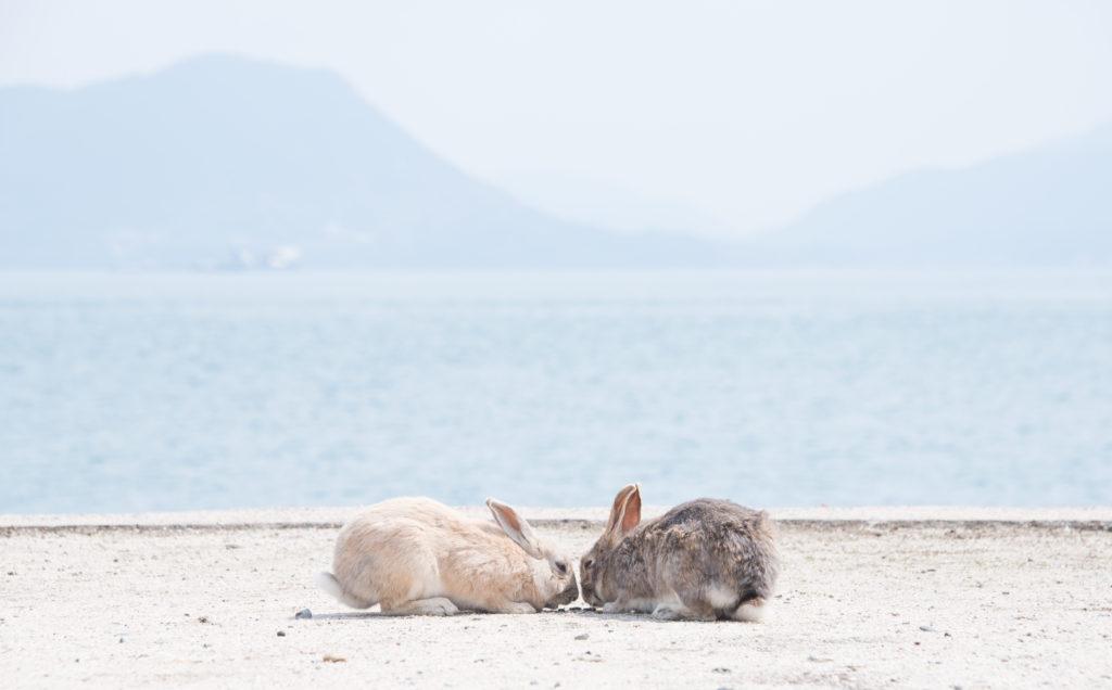 """瀬戸内海に浮かぶ癒しの""""うさぎ島""""へ。広島県「大久野島」プチ旅♪"""