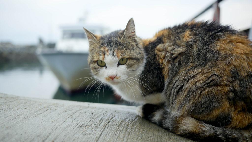 """猫好き必見!一度は行ってみたい愛媛「青島」はまさに""""猫の楽園""""♪"""