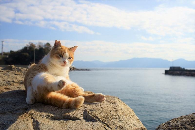 """愛媛県の猫島「青島」はまさに""""猫の楽園""""♪松山からの日帰り島旅!"""