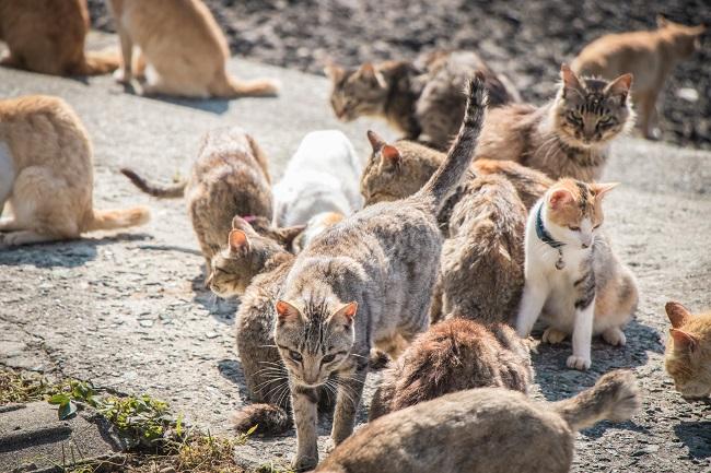 青島_猫たち