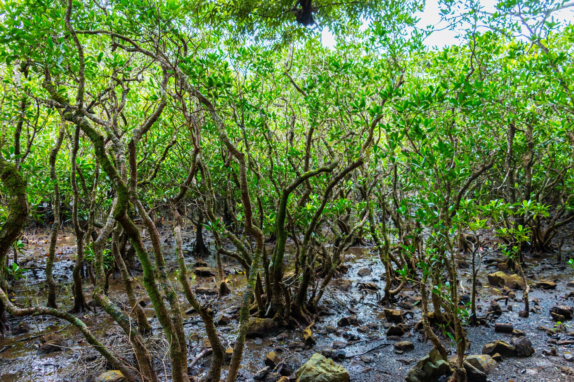 奄美大島_マングローブ国立公園特別保護地区