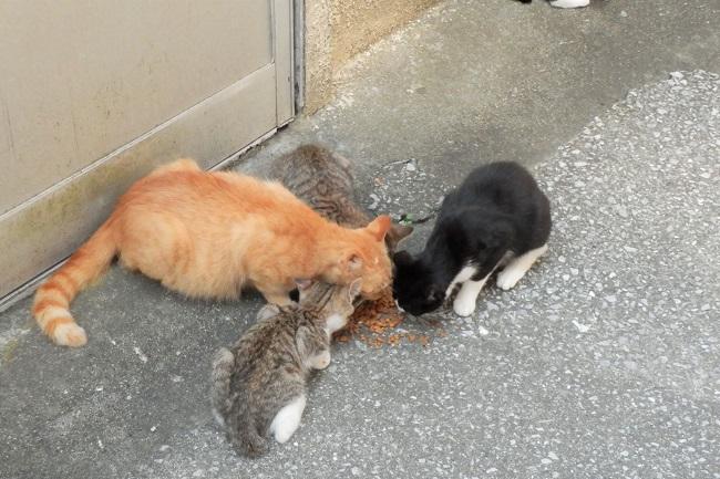 保戸島_島猫