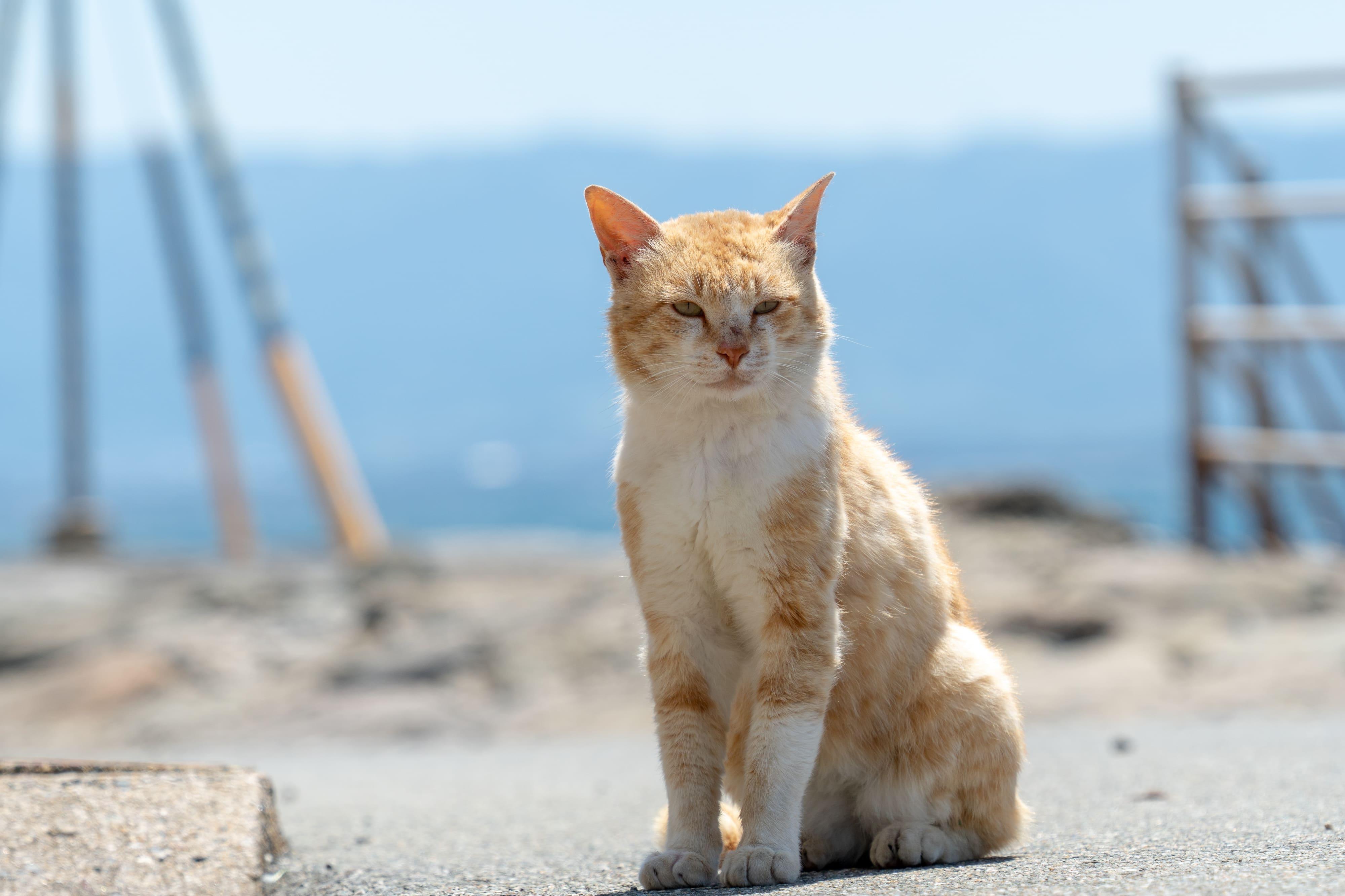 相島_海と猫