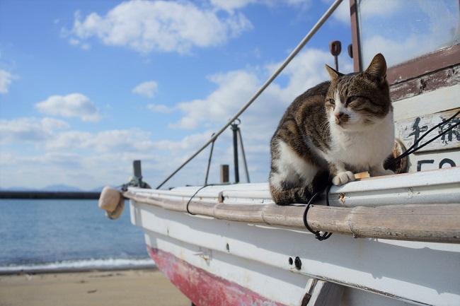 藍島_猫_210429