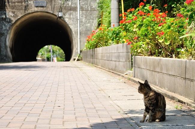 藍島_猫_190402