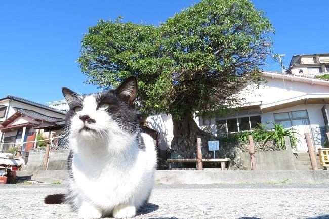 湯島_猫_210429