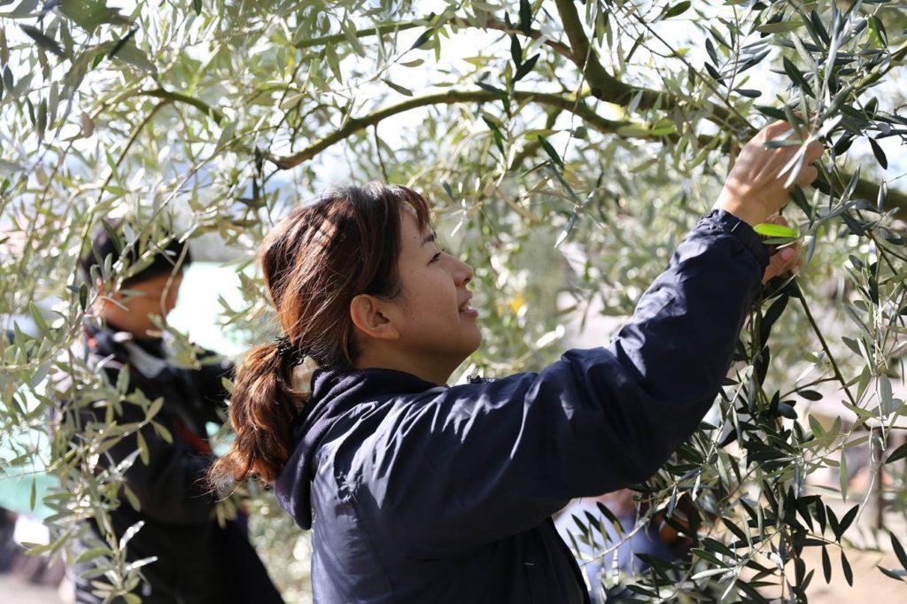 小豆島:井上誠耕園の『収穫祭』開始!実りの季節を迎えた小豆島で『農業体験』&旬を味わう『お食事プラン』