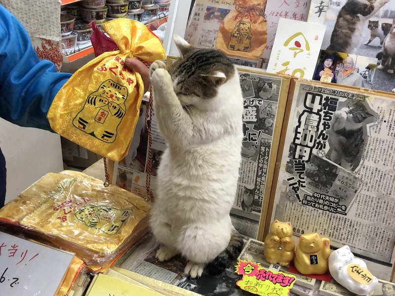 """宝くじファンが押し寄せる「高島」には""""リアル招き猫""""がいる!ぐるっと島散歩♪"""