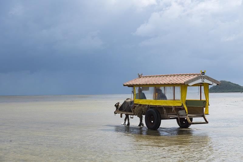 南の島の小さな楽園「由布島」。そこは水牛車で渡る南国テーマパーク