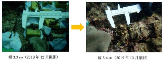 沖縄_「レンタカーに乗って、サンゴを増やそう2020」