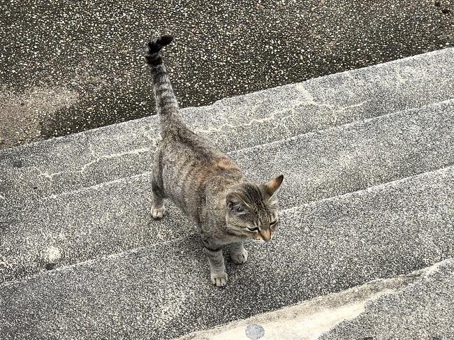 対馬_鮎もどし自然公園の猫