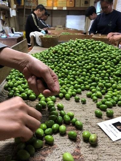 小豆島_井上誠耕園「小豆島産緑果オリーブオイル」