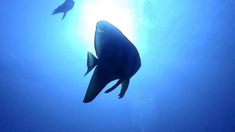 人生で一度は行きたい絶海の孤島!小笠原諸島「母島」で最高の体験を