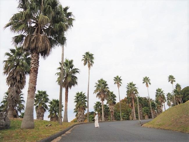 屋代島(周防大島町)_A01