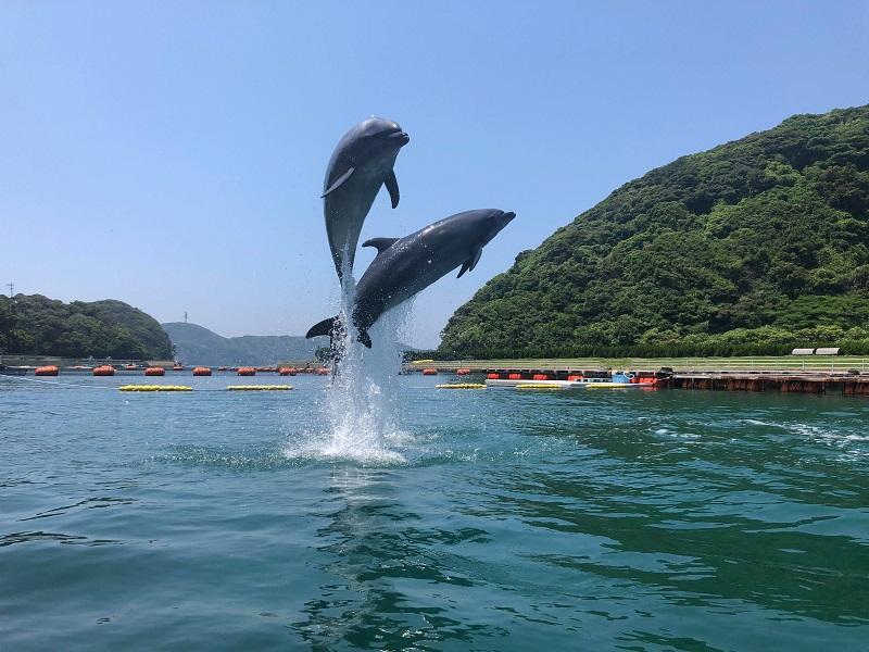 壱岐島:イルカとヒトが会話するようにコミュニケーションできる社会を実現したい!