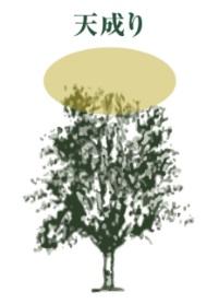 小豆島_井上誠耕園「エッセンシャルオリーブオイル」