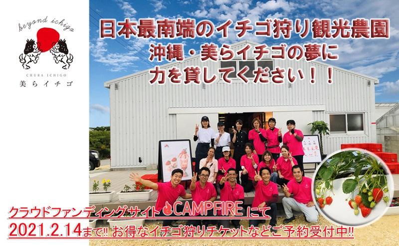 日本最南端・沖縄県内最大規模のイチゴ狩り農園「美らイチゴ」多くの方に笑顔を届けたい!