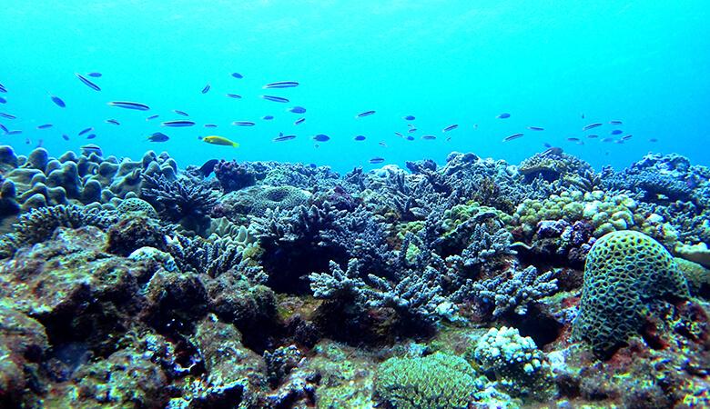 喜界島:『サンゴ礁文化フォーラム』2/20 13時~オンライン同時開催