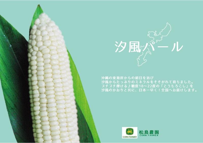 マンゴーより甘い?!沖縄から白いとうもろこし「汐風パール」日本一早く全国発売開始