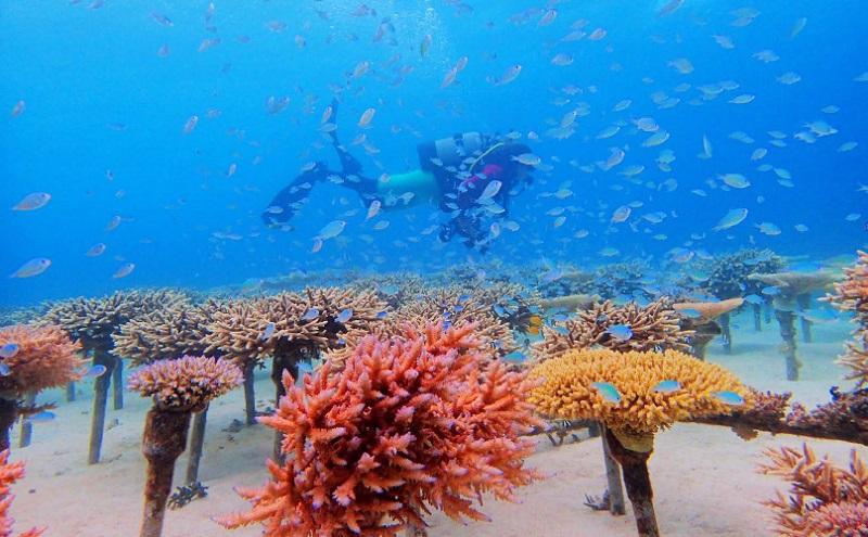 沖縄・名護市:ザ・リッツ・カールトン沖縄、体験型プログラム「サンゴの苗づくり体験」提供開始