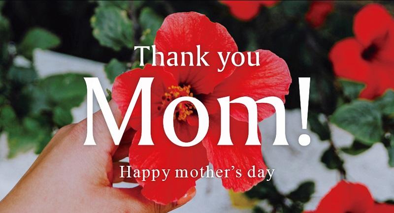 沖縄:母の日にぴったりな「MOMでいごの花の香り」特別なギフト販売