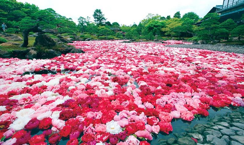大根島:由志園、豪華絢爛な牡丹の池は必見!島根の春を満喫!