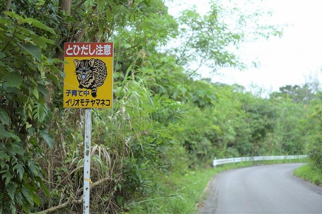 西表島_イリオモテヤマネコ注意標識_210611