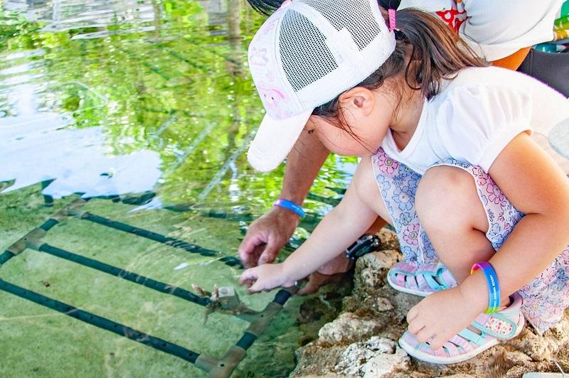 沖縄・恩納村:ルネッサンス リゾート オキナワ、美ら海を守るSDGsプログラム
