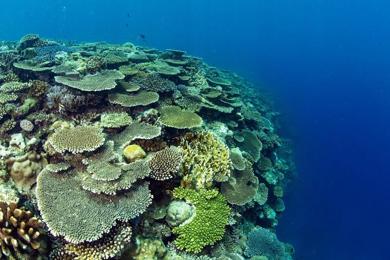 ANAインターコンチネンタル万座ビーチリゾート、サンゴ礁保全プログラム『Green Fins』参加へ
