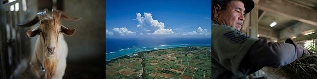 沖縄・多良間島_たらま農産