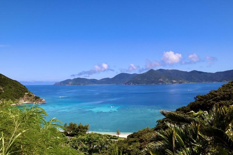 世界自然遺産登録目前!今年の夏休み自由研究の舞台は奄美大島だ!