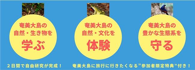 奄美大島_オンライン自由研究