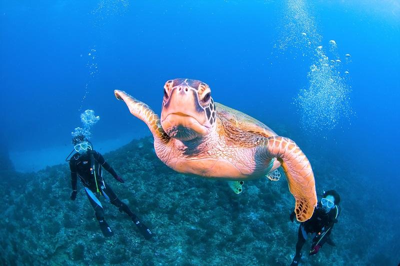 【屋久島自然案内】森と海のつながりを知るダイビング&シュノーケリング