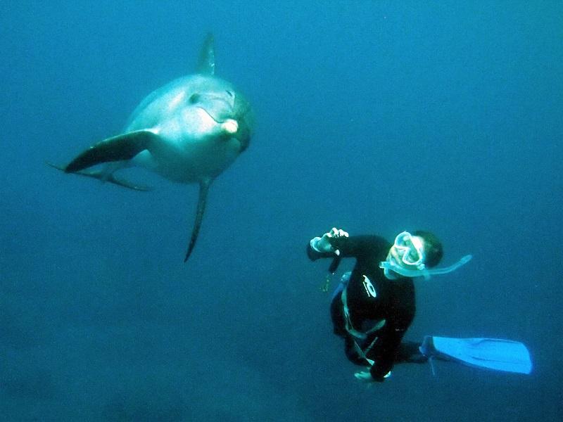 【Dolphin Club】三宅島から出港!イルカの棲む島・御蔵島で感動体験