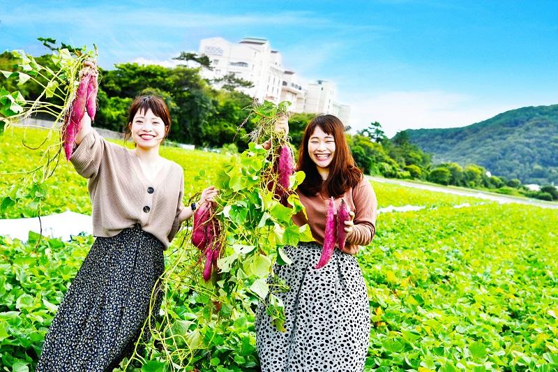 大毛島:アオアヲ ナルト リゾート、鳴門金時芋掘り体験で秋を満喫!