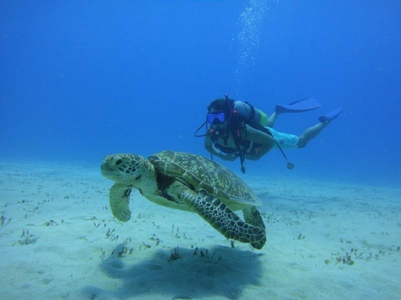 【奄美ダイビングスクールはげまりーん】奄美大島の海峡でダイビング&ヨットクルーズ