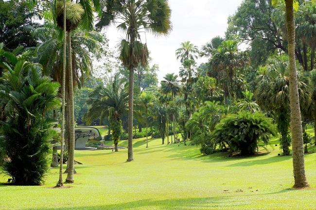 シンガポール島_植物園
