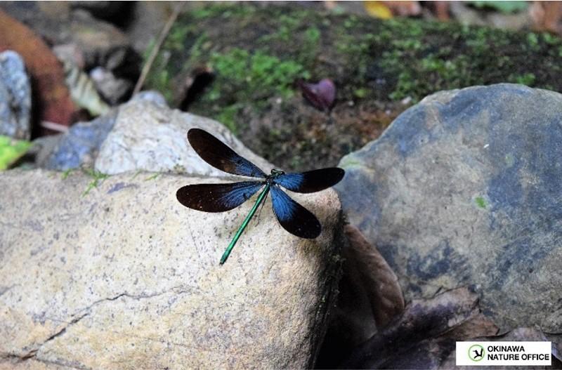 ザ・リッツ・カールトン沖縄、やんばる地域の自然散策体験『ネイチャーガイドと巡る比地大滝』