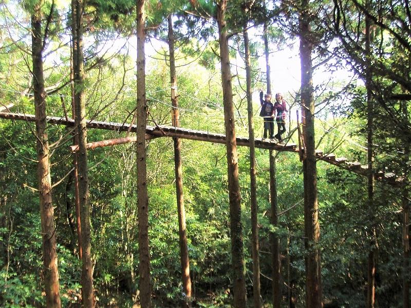 【梢回廊キャノッピ】屋久島の森の中をキャノピーウォーク体験