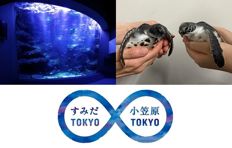すみだ水族館でアオウミガメの赤ちゃんを一般公開!世界自然遺産の小笠原諸島の海から今年もやってくる!