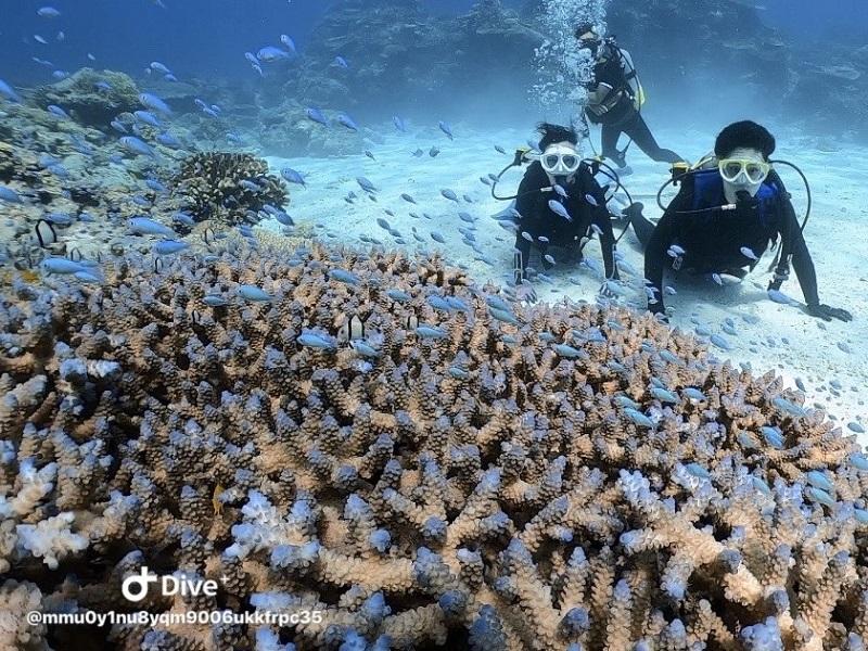 【マリンジョイント】沖縄本島からケラマ・チービシ諸島へ日帰り体験ダイビングツアー
