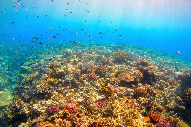 沖縄・恩納村_DiveCenter Isles_A1025