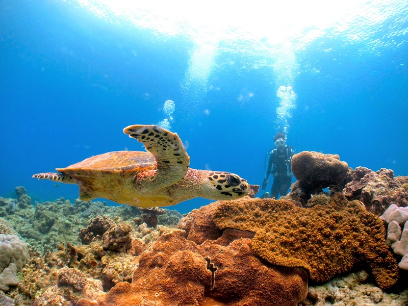 【Dive Center isles】沖縄・恩納村エリアで楽しむファンダイビング